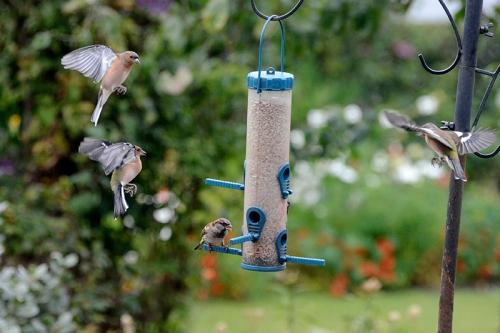 feeder queue