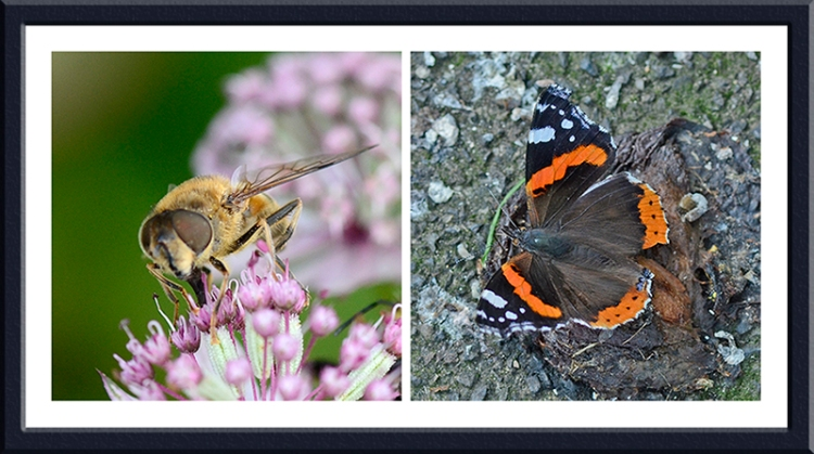 hoverfly and butterfly