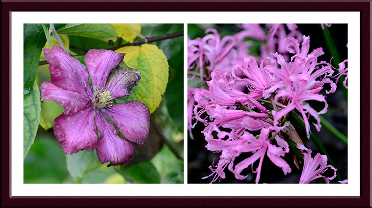 clematis and nerine
