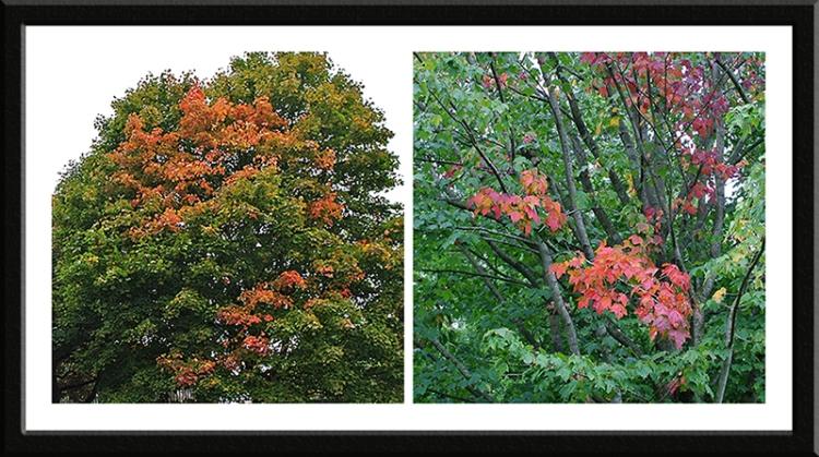 autumn colour Bitts park