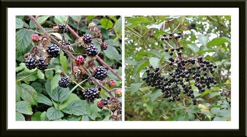 brambles and elderberries