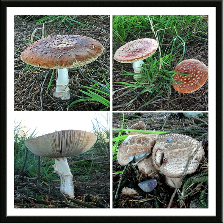 golf course fungus