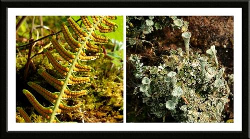 fern and lichen