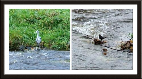 heron and dipper