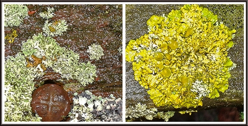 lichen on bench