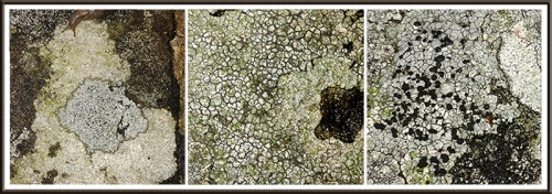 lichens at skippers
