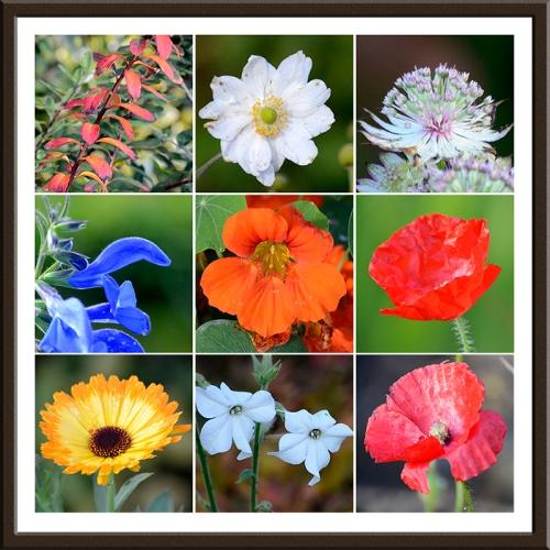 garden flowers in November