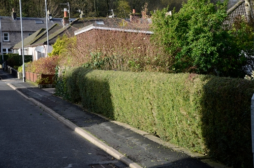 Front hedge