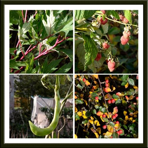 fruit and veg in November