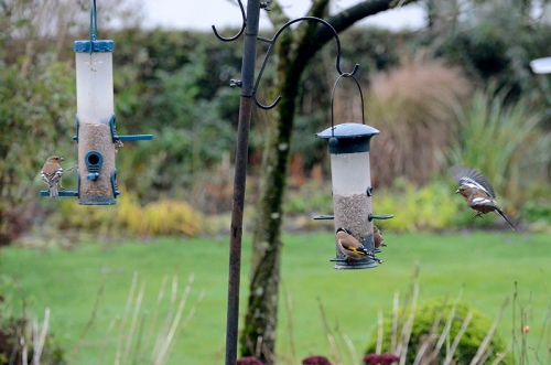 busy feeders