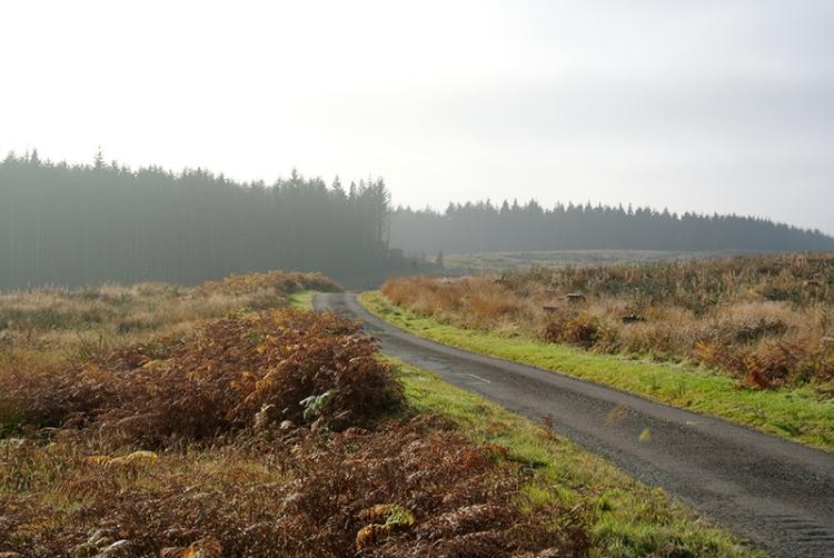 Barnglieshhead road