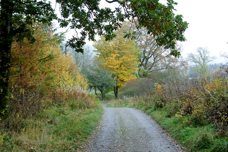 Becks path