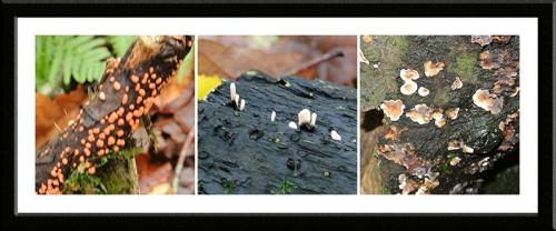 small fungus