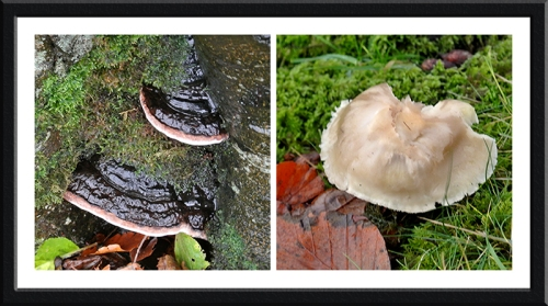 fungi at Stubholm
