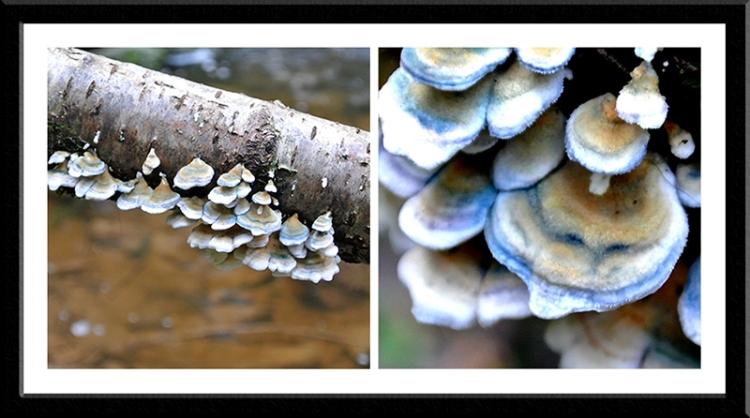 Fungus at Becks burn