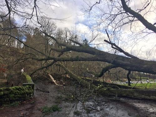 Tree on sawmill Brig