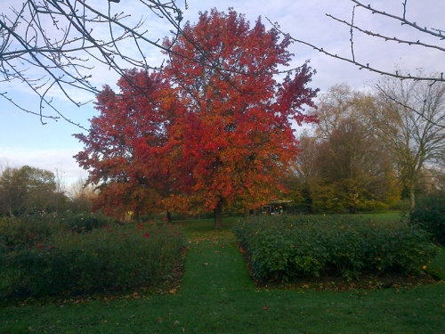 Early morning colour in Regent's Park