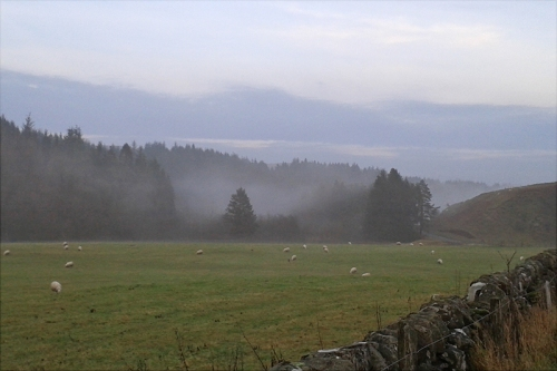 Wauchope mist