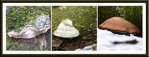 Talking tarn fungus