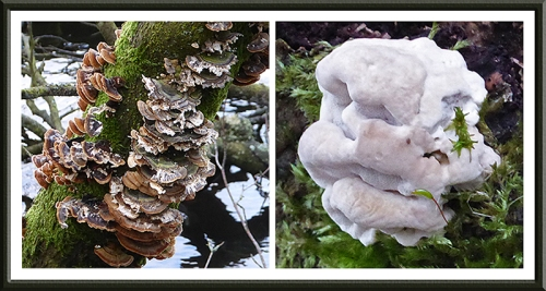 Talkin Tarn fungi