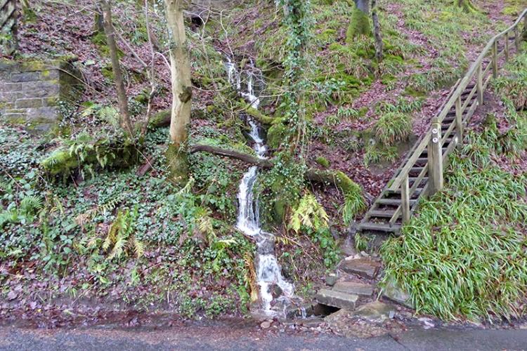 steps and stream