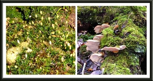 moss and fungus