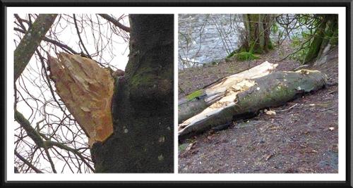 fallen fungus tree
