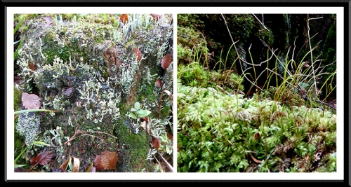 lichen and moss beside esk