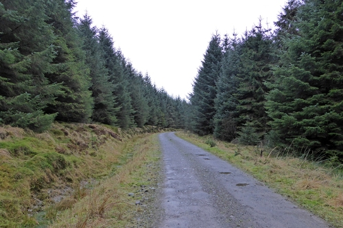 Kirtleton Forest track
