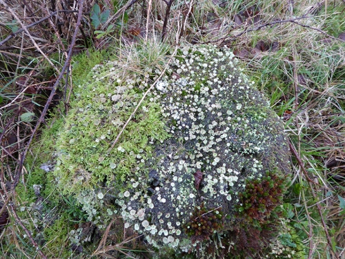 Kirtleton Forest track lichens