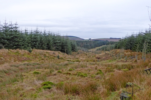 Kirtleton forest