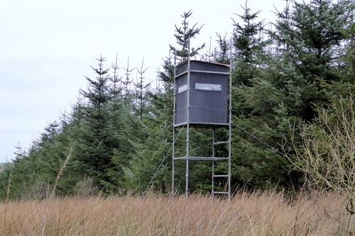 Kirtleton forest hide