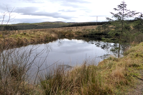 Kirtleton forest pond