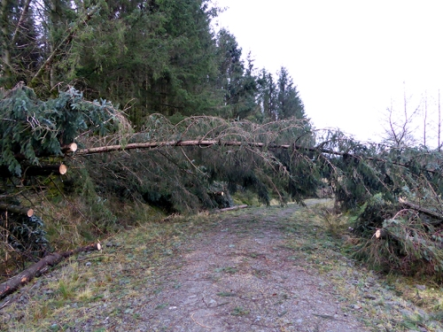 Kirtleton forest fallen tree