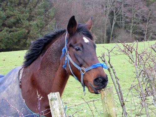 Hallcrofts horse