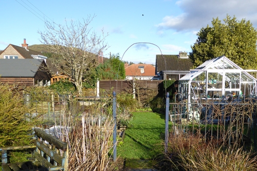January sunshine in the garden