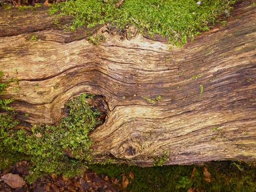 tree grain