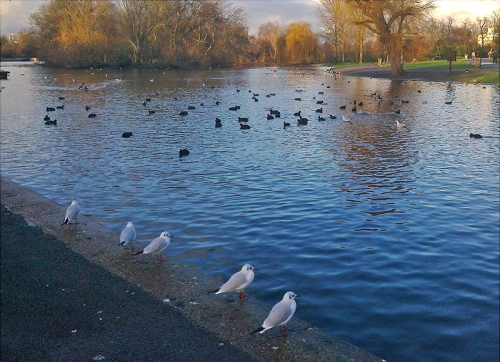 Evening light at the boating lake, Regent's Park
