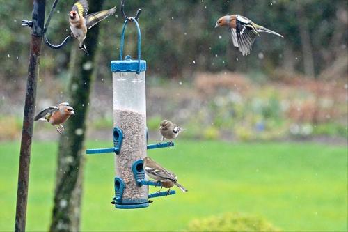 busy feeder
