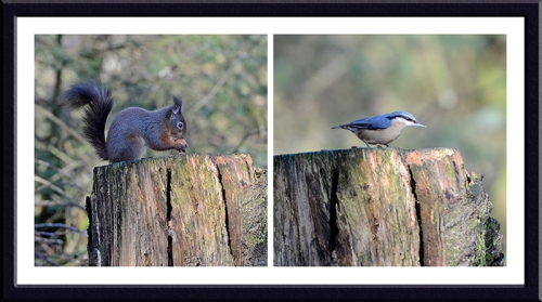 squirrel and nuthatch