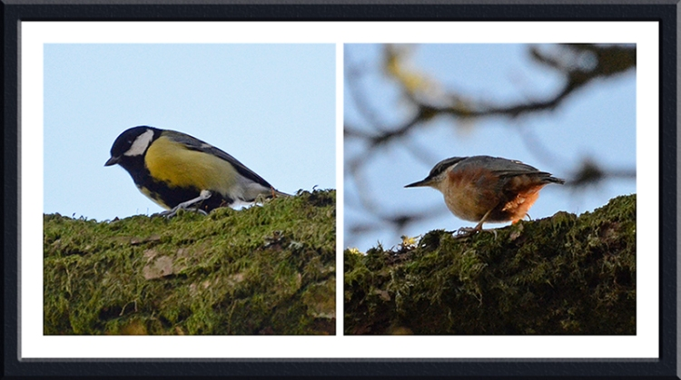 great tit and nuthatch