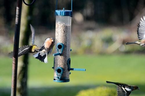 uncooperative birds