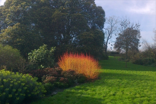 Burning Bush, Regent's Park