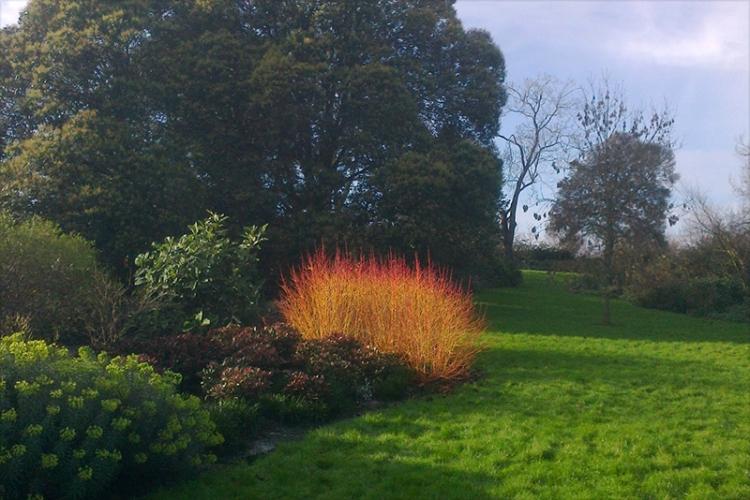 Burning Bush, Regent's Park