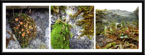 Park wall mosses