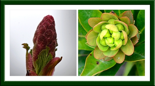 currant and euphorbia