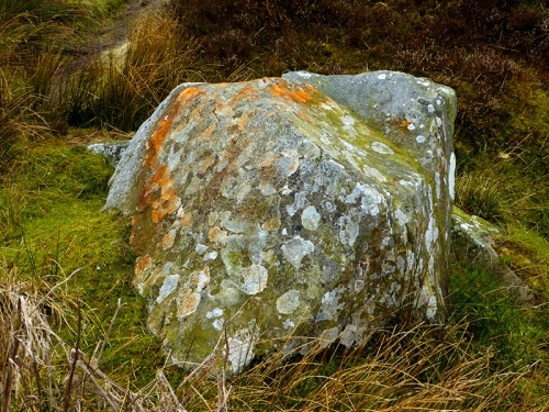 White Yett boulder with lichen
