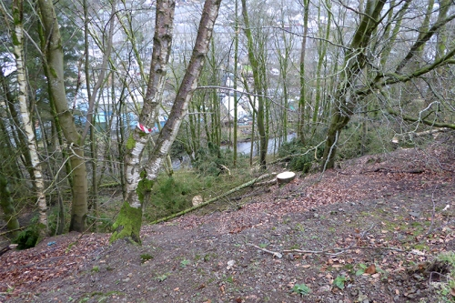 tree felling at Stubholm