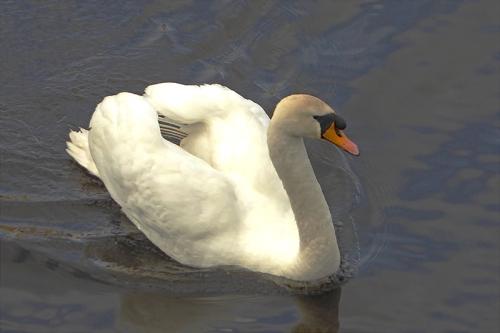 leith swan