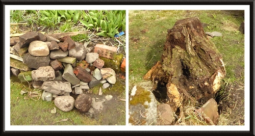 stones and tree stumps